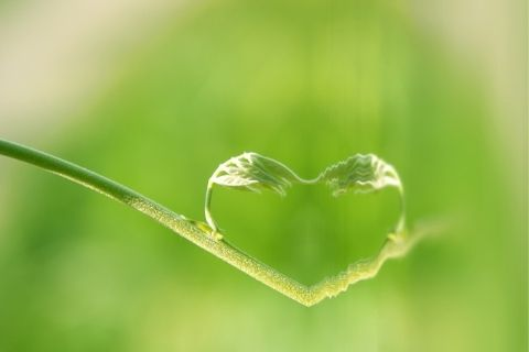 Page - 480x320 Green Heart